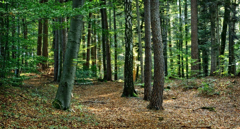 bosque de árboles