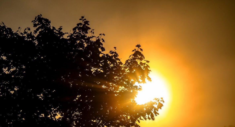 rayos de sol en la madera